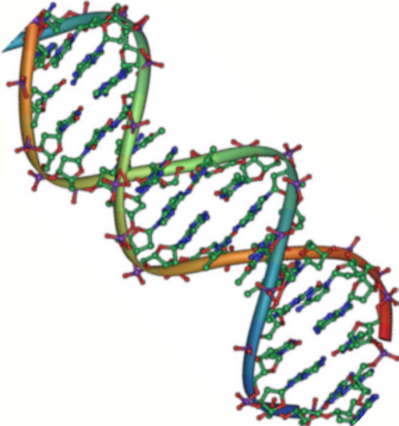 DNA is double helix