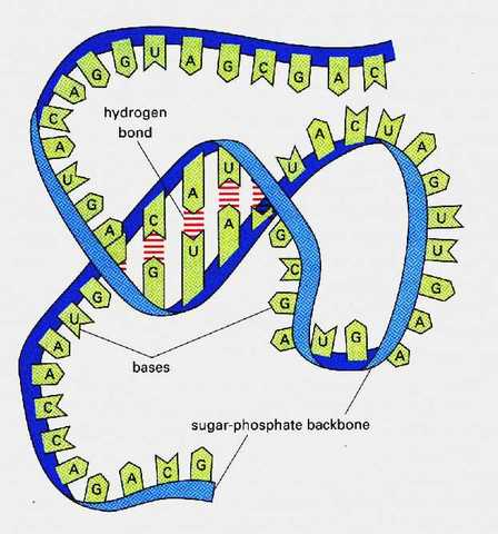 Mechanism of gene expression