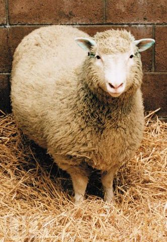 Dolly the sheep is cloned from adult cell