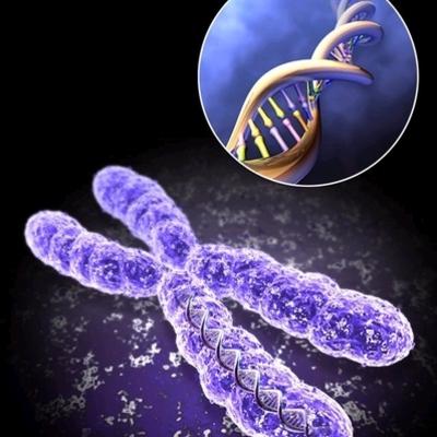 The History of Genetics timeline