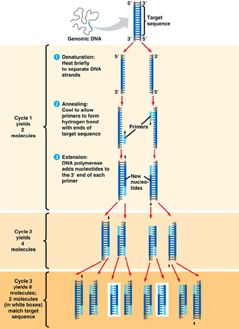 Invention of polymerase chain reaction