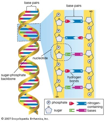 Completion of the Human Genome Project