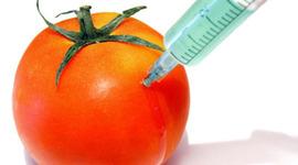 Genetically modified food timeline