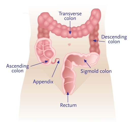 Colorectal Cancer and Polyps - Fecal Immunochemical
