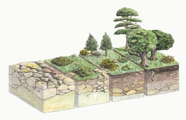 Cowles y la sucesión ecológica