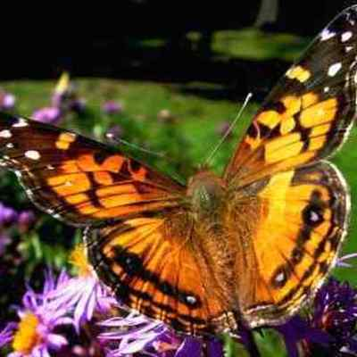 From a Caterpillar to a Butterfly timeline