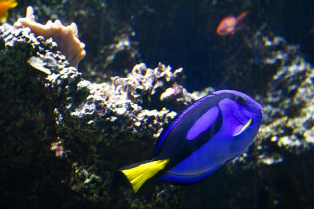 Finding Nemo Debuts