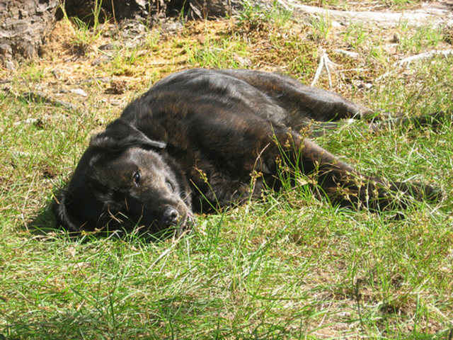 Corky spends the summer laying in the sun