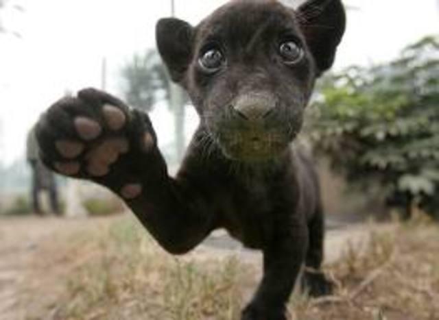 Jaguar Pride!!!!!