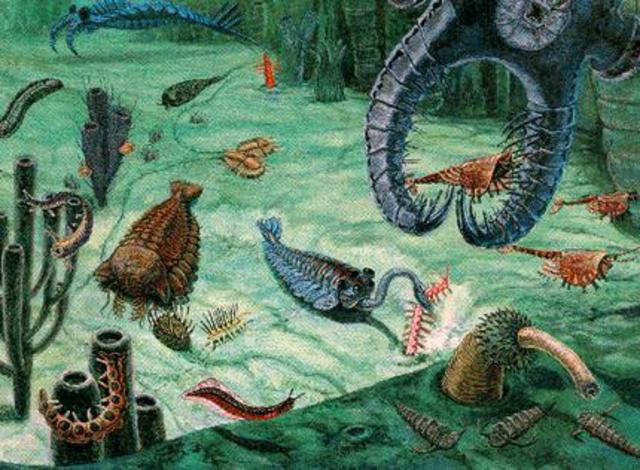 Cambrian explosion of hard-bodied organisms