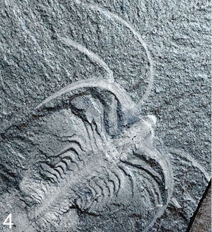 Fossilization of the Burgess Shale