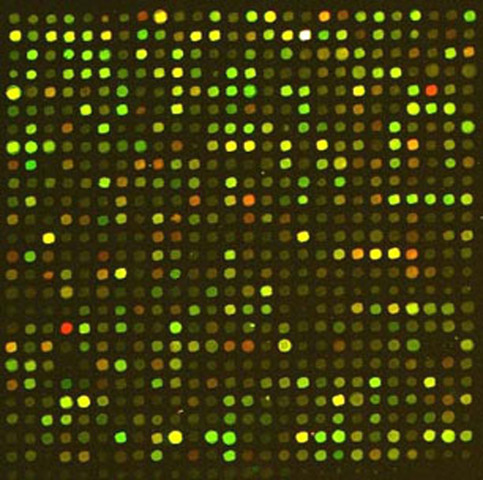DNA microarrays are invented