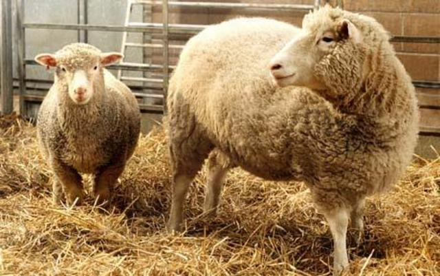 The first cloning of a mammal (Dolly the sheep)