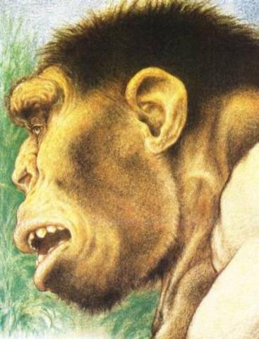 Homo Erectus-1.6-1 Million Years Ago