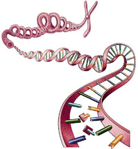 informacion genetica en el ADN