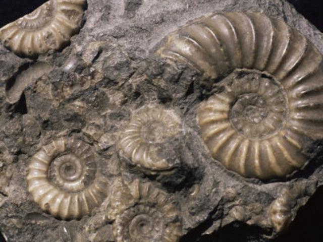 (3.5BYA) Fossils