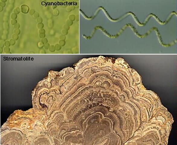 (3.5 BYA) First Organisms