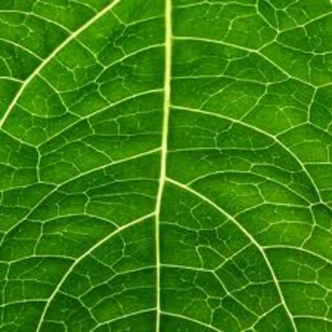 (3 BYA) Photosynthetic Life