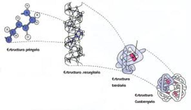 los genes codifican proteínas