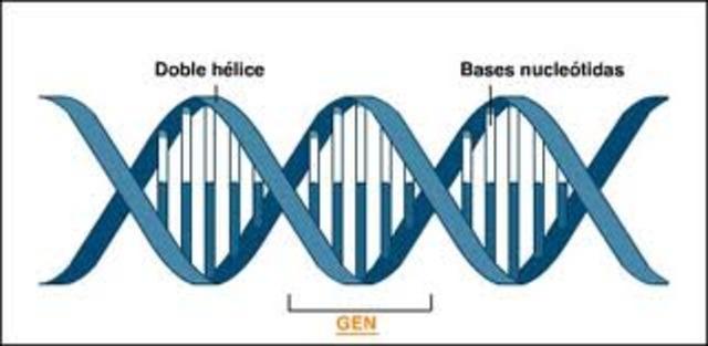 codigo genetico en tripletes