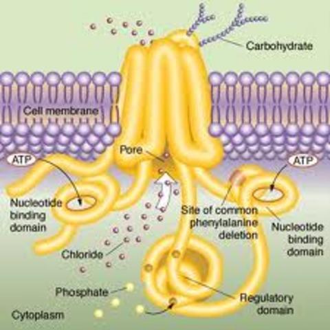 proteina CFTR