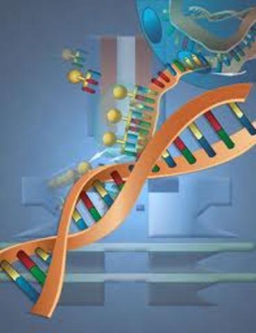 código genético humano