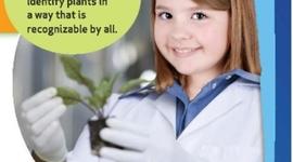 Classifying Plants timeline