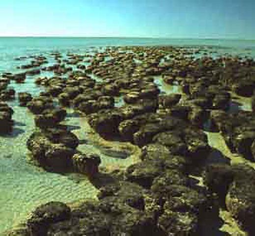 Formation of Stromatolites Begins (3.5 BYA)