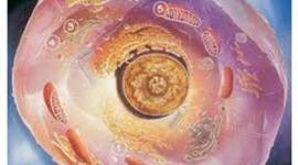 Teoria Celular : Espinoza, Genoves, Vizcarra timeline