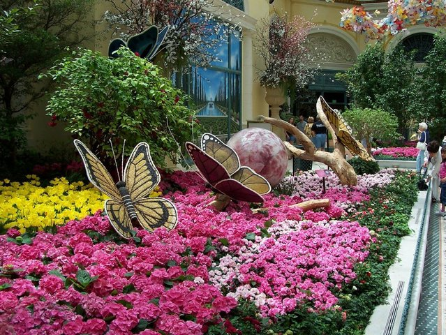 Las Vegas Photo Shoot; Bellagio/ Botanical Gardens