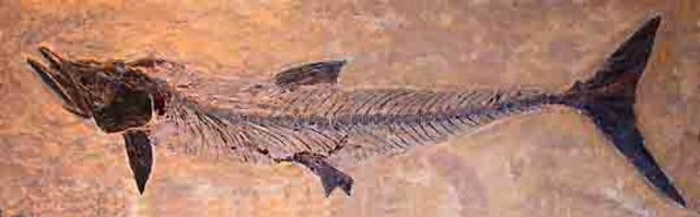 Devonian Period: Age of fish
