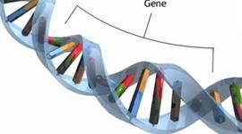 Matt Green: Mr.Wolfgangs Gene time timeline