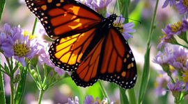 Life Cycle Of a Butterfly timeline