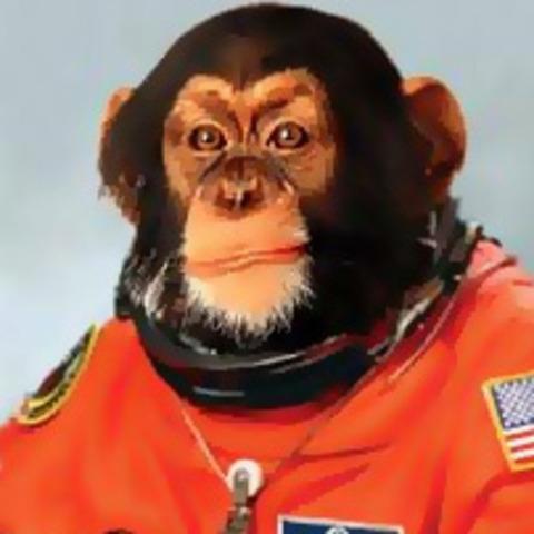 Monkey lost in Space
