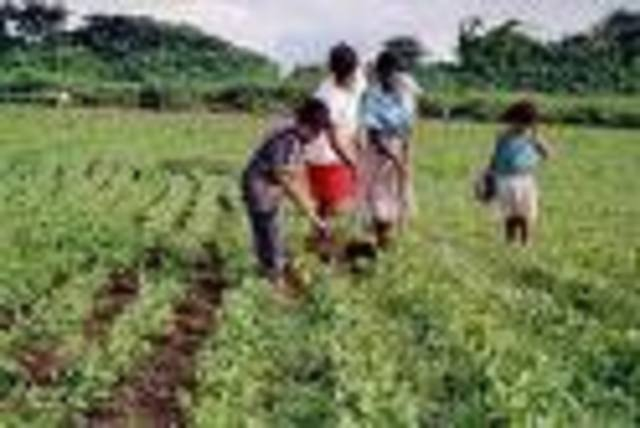 SEGUNDA ETAPA: La agricultura