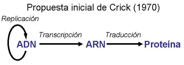 Formulació del Dogma de la Biologia Molecular