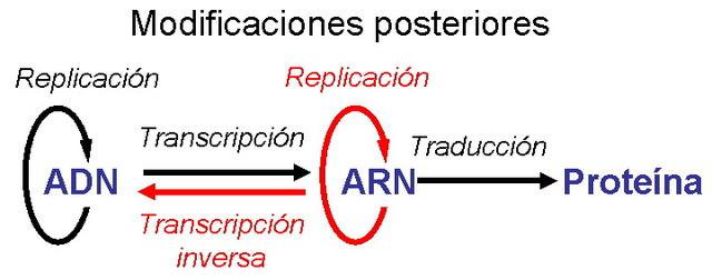 Reformulació del Dogma de Biologia Molecular