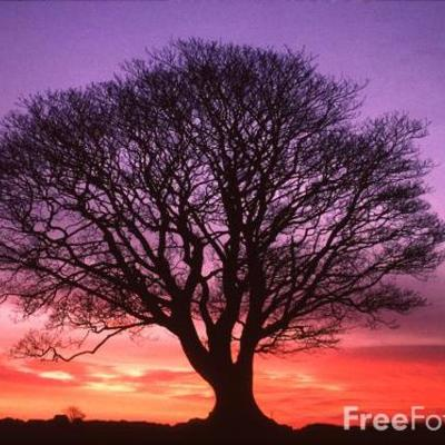 The Great Tree of Avalon: Child of the Dark Prophecy timeline