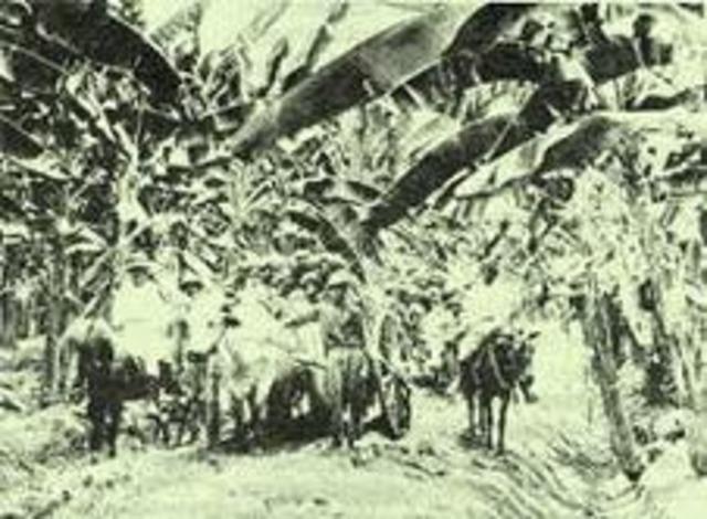 Matanza de trabajadores en la zona bananera