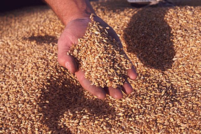 Grain Shipments to USSR