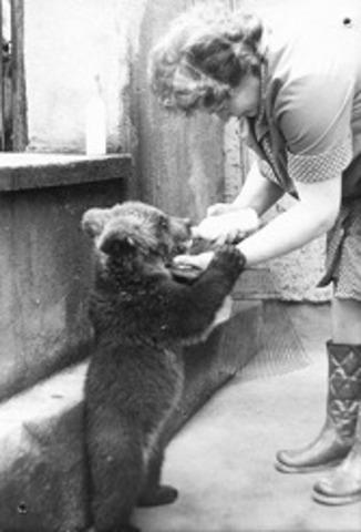 Braunbären ziehen ein