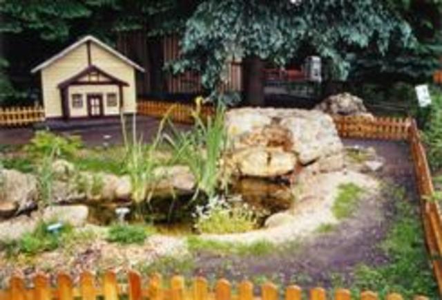 Bachlauf im Tierpark, Zauneidechsen