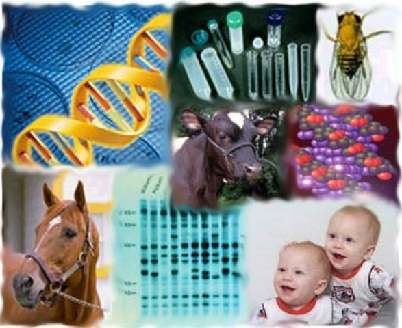 PIAGET: Introducción a la epistemología genética