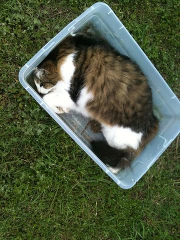 How Long Cat Decompose