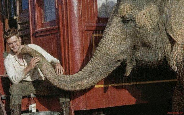 Water For Elephants timeline | Timetoast timelines