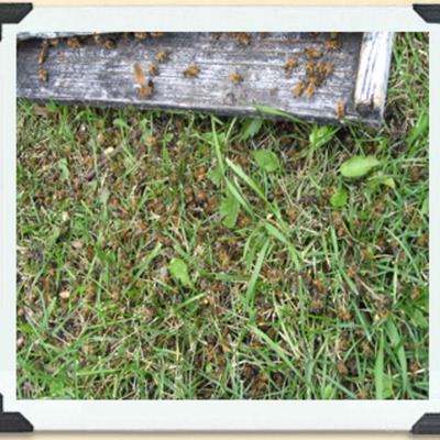 A Worker Bee's Life timeline