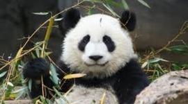 Life Of A Panda timeline