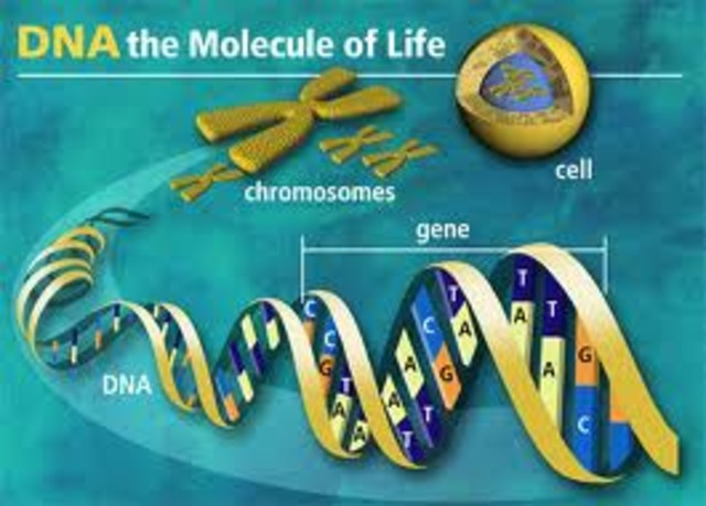 Watson & Crick Describe Structure of DNA