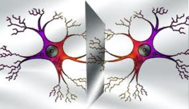 Regulador de maduración neuronal
