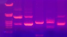 Biotechnology Timeline: Andry Mey, Erica Gacasan